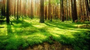Красивые фото. В лесу. Прогулка под пение птиц.