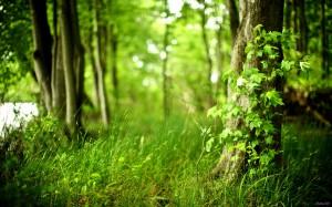 Красивые фото. В лесу.