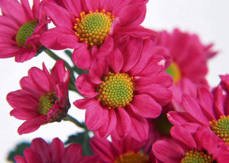 Позитивные фото. Красивые фото. Цветы. Астры