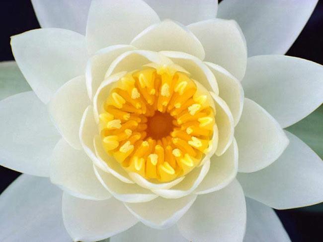Позитивные фото. Цветы. Кувшинки