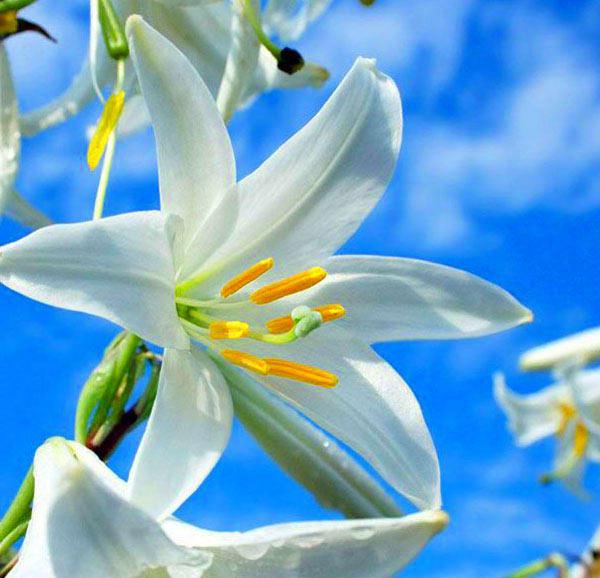 Позитивные фото. Цветы. Лилии