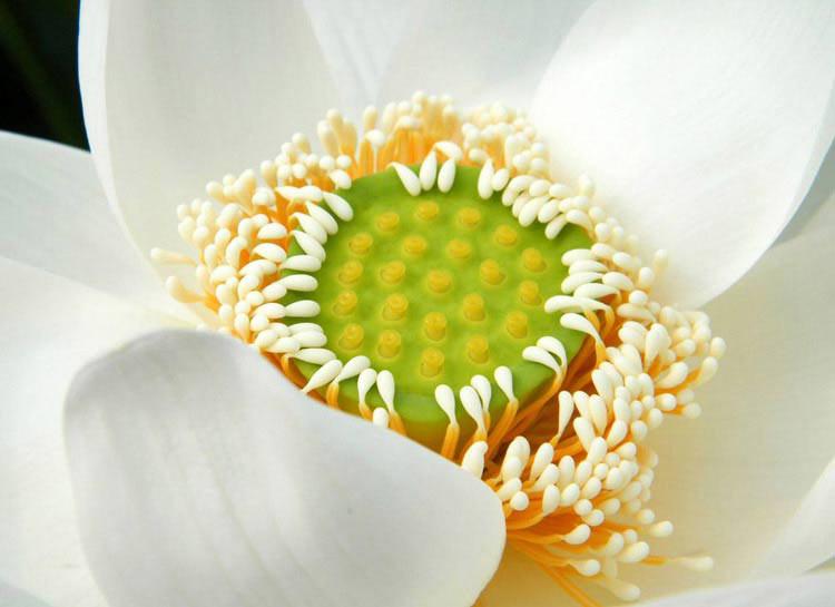 Позитивные фото. Цветы. Лотос