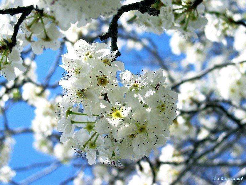 И вот она пришла, долгожданная весна!