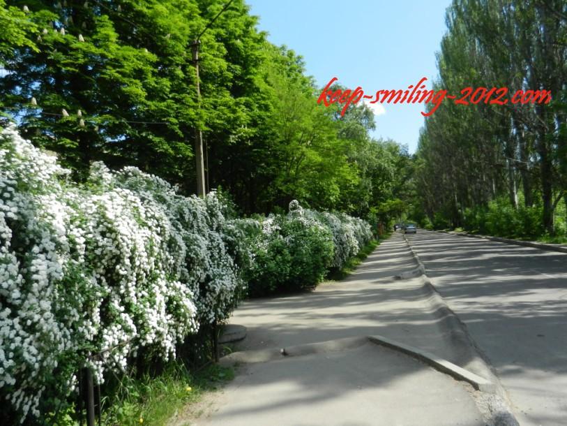 Фото Донецка. Улочка рядом с моим домом