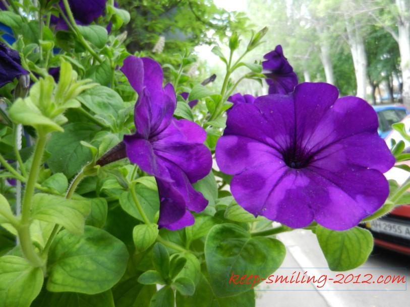Фото Донецка. Городские цветы.