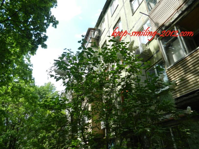 Фото Донецка. Цветущие кусты сирени под окнами