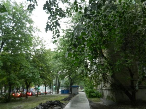 Фото Донецка. Тополиный пух