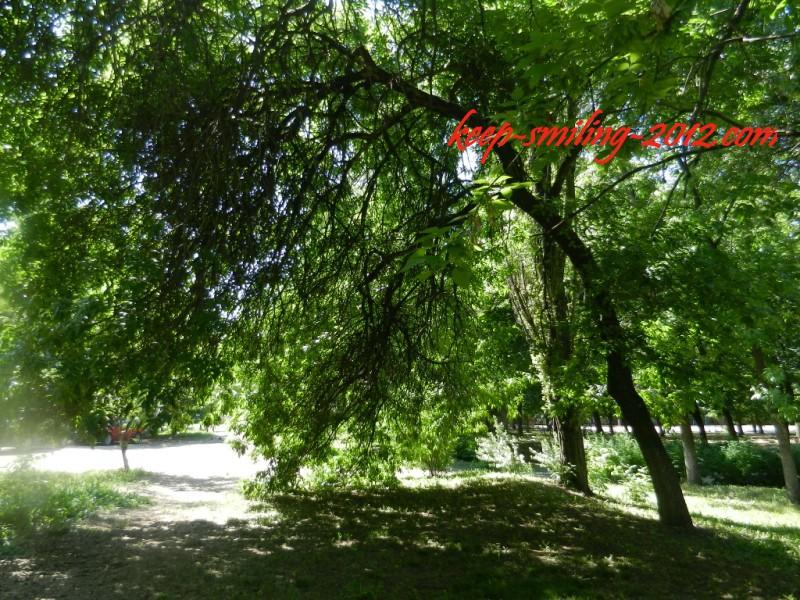 Фото Донецка. В зеленых тонах.