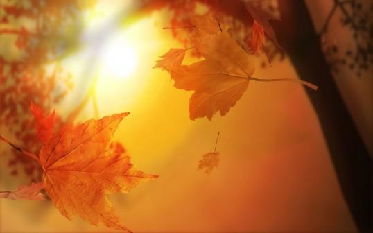Осень. Стихи, музыка, фото.