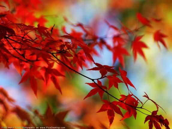 Осень. Красивые фото, стихи, музыка.