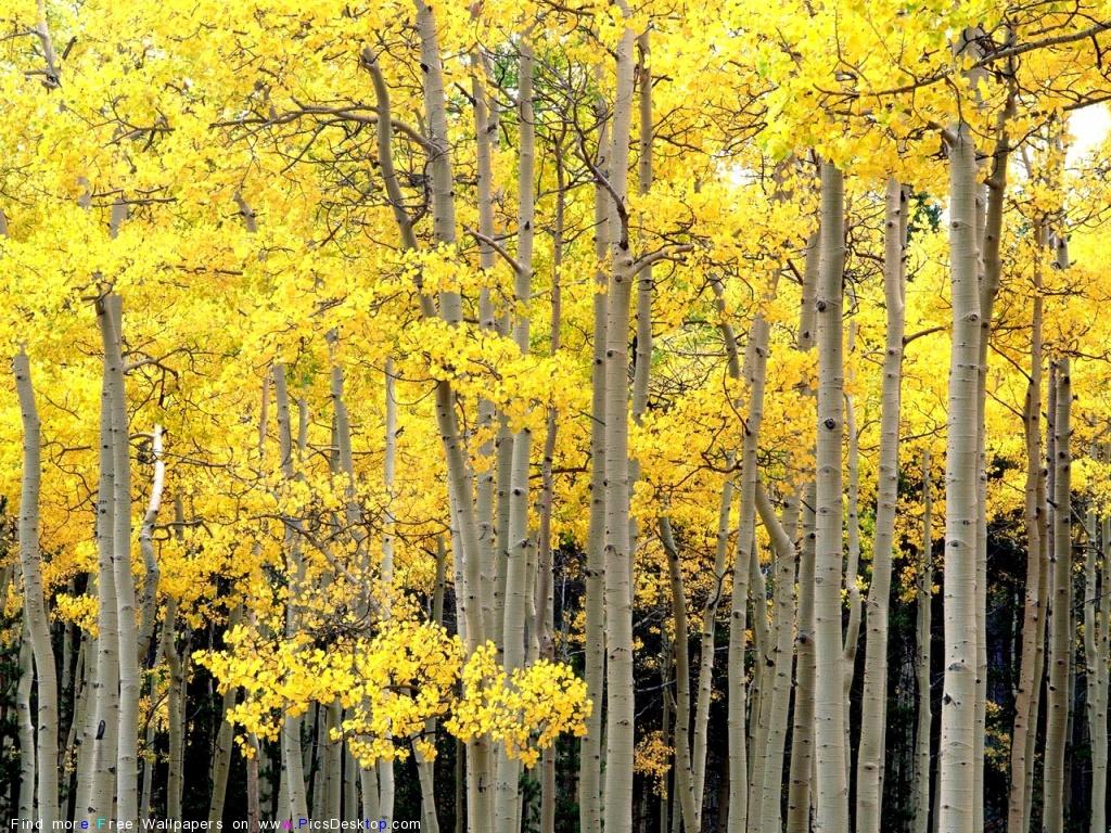 Осень. Красивые фото, стихи, песни.