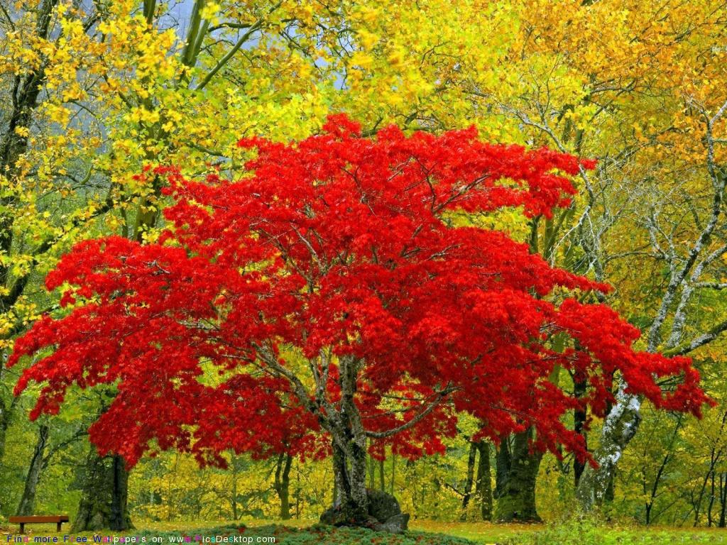 про осень красивые картинки