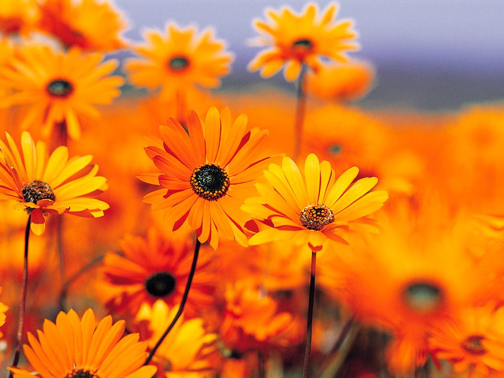 Осень красивые фото стихи музыка