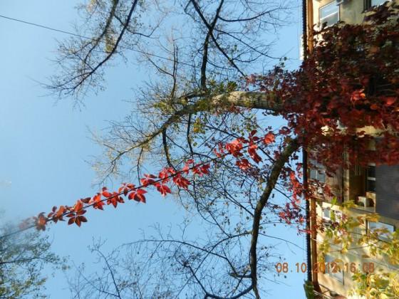 Фото Донецка. Осенние дворы.