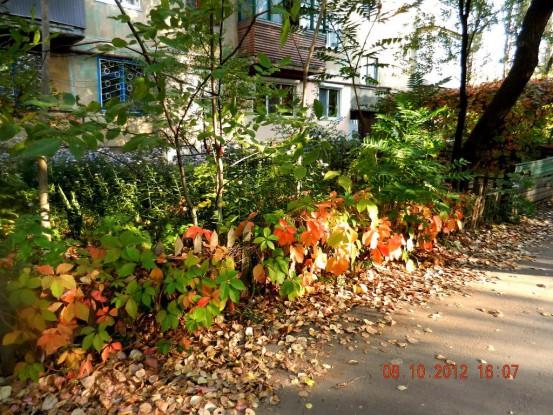 Фото Донецка. Осень.